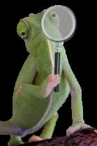 chameleon-holding-magnifying-glass-trans-copy-200x300
